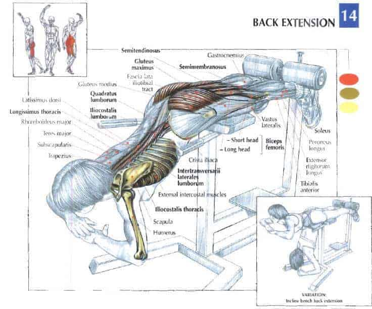 Best Roman Chairs Hyperextension Benches For Lower Back Workout